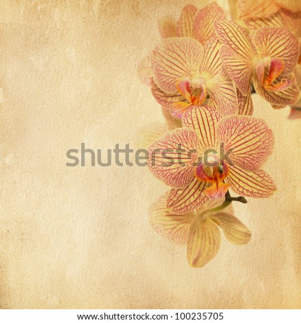 vintage paper with orchid