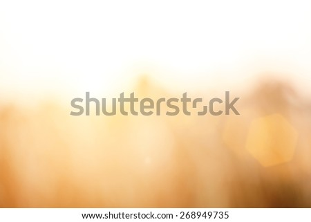 Vintage photo and Abstract blurred background.Brown and gray grass in sunset warm light and lens flare