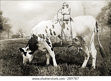 Vintage photo of a Baby on Top of a Cow