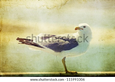 Vintage photo of a seagull-artistic retro styled picture - stock photo