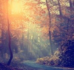 Vintage photo of autumn forest
