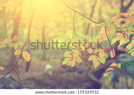 Vintage photo of autumn leaves