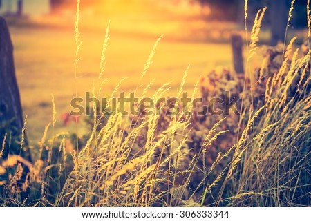 Vintage photo of beautiful landscape with morning meadow. Sunrise over morning meadow in Poland