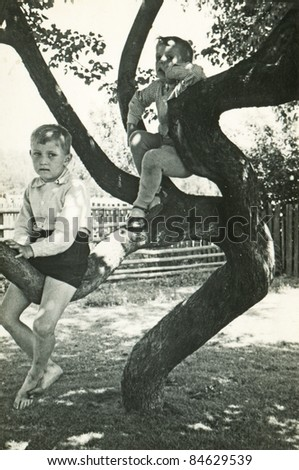Vintage photo of brothers playing on tree (fifties)