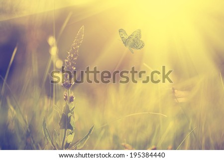 vintage photo of butterfly and...