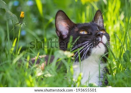 vintage photo of cat in grass. cat portrait