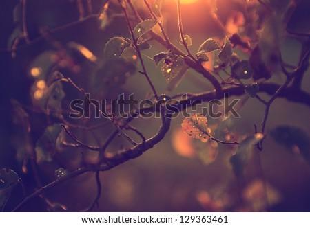 vintage photo of cherry tree...