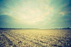 vintage photo of corn field landscape