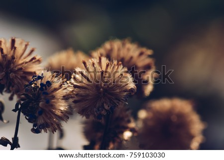 vintage photo of dry flowers in winter field on natural background in morning. Outdoor