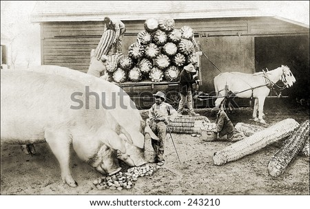 Vintage Photo of Farmer Feeding Two Huge Pigs
