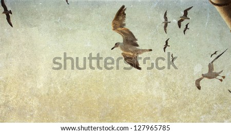 Vintage photo of flying seagulls