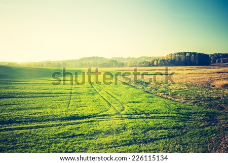 vintage photo of green cereal field #226115134