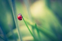 vintage photo of ladybug on grass