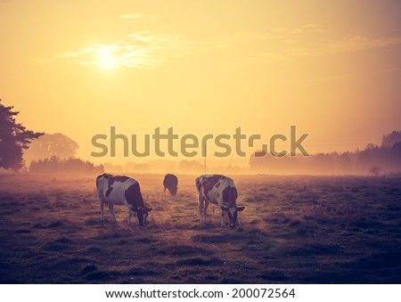vintage photo of landscape with cows