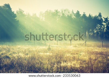vintage photo of landscape with sunbeams over small pine forest