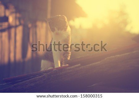Vintage photo of little cat on roof