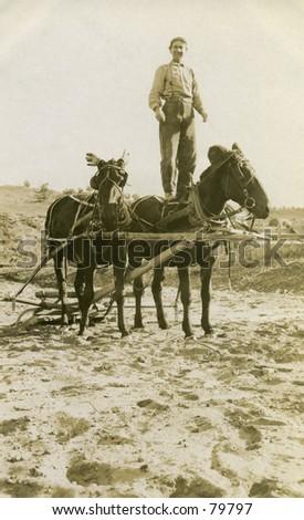 Vintage photo of man standing on mule in a field