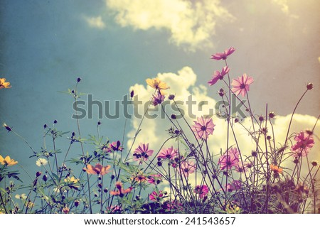 Vintage photo of nature background with wild flowers and plants