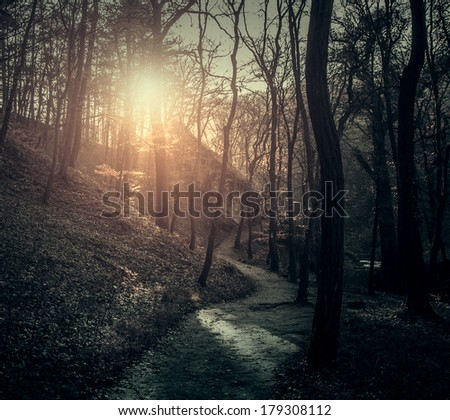Vintage photo of path in forest