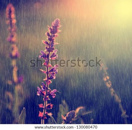 Vintage photo of purple wild flower in rain
