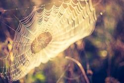 vintage photo of spider web