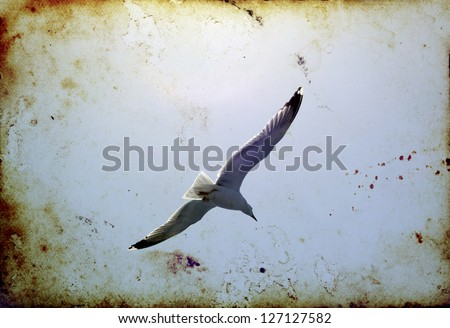 Vintage photo of summer sky, ocean and flying seagulls