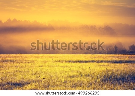 Vintage photo of vibrant landscape with foggy meadow in Poland. Countryside with wild foggy meadow. #499266295