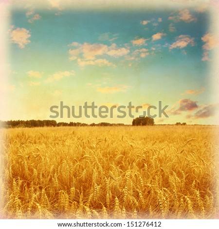Vintage photo of wheat field under blue sky. #151276412