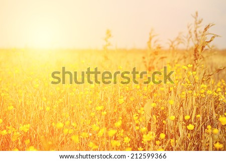 Vintage photo of yellow flower field on a sunny day