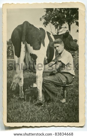 Vintage photo of young man milking cow (forties)