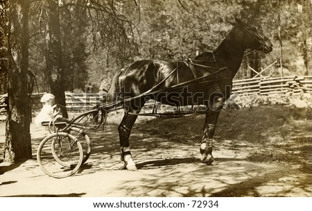 Vintage photograph of baby in horse cart, circa 1900 - stock photo