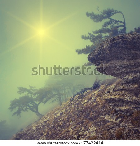 Vintage picture. Foggy forest on the rocky hillside with a lonely tree on a stone