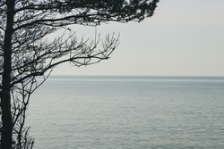 Vintage pine tree with pine cone silhouette with calm blue sea waves and clear blue sky. the horizon.