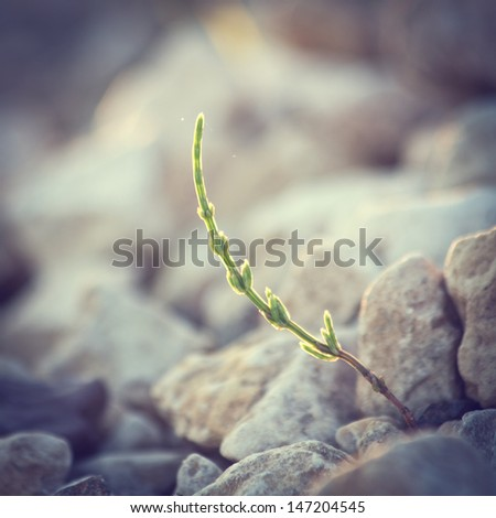 Vintage plant grows in rocks and symbolizes struggle