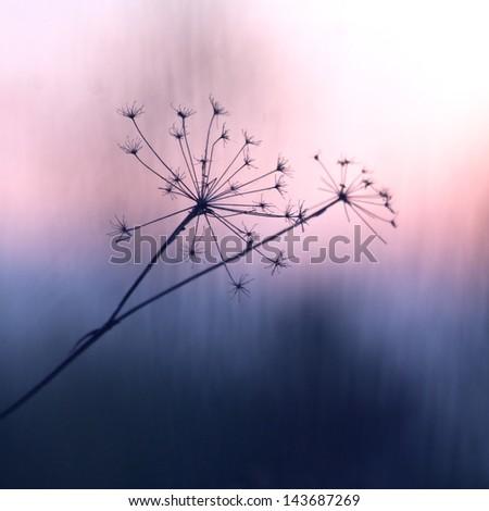 vintage plant sunrise