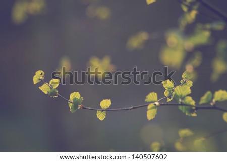 vintage plants