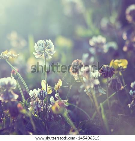 vintage plants dandelions...