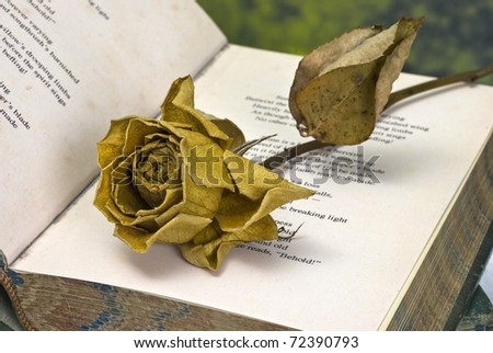 Vintage poetry book with dead rose
