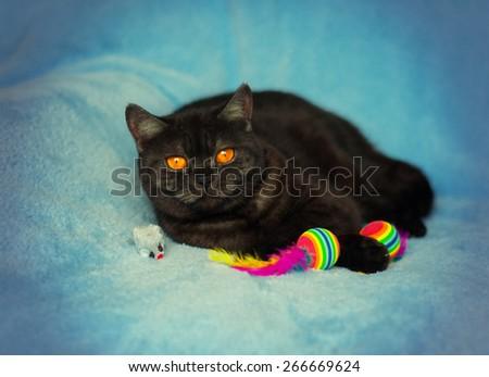 Vintage portrait of cute cat
