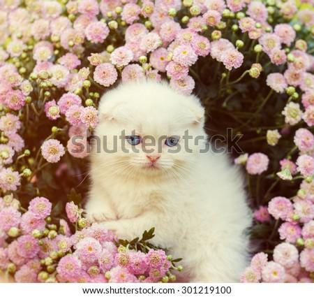 Vintage portrait of cute kitten in flowers