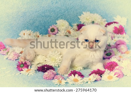 Vintage portrait of cute white kitten on the flowers