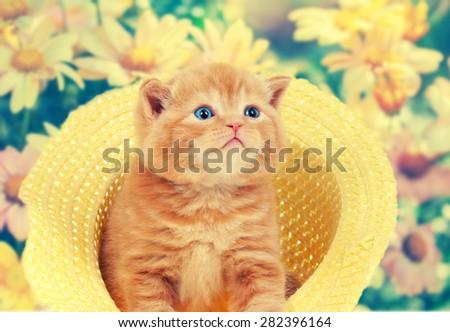 Vintage portrait of little kitten in straw hat against flowers background
