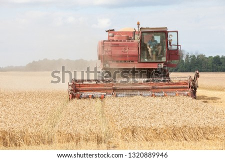 Vintage red combine working on a wheat field in Jelgava area, Latvia #1320889946