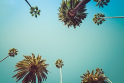 Vintage Rodeo Drive Beverly Hills Captivating crown-liked Palm Trees