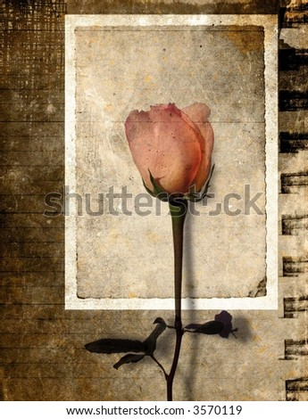 Vintage rose in grunge paper background
