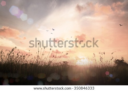 Vintage Style Art Rural Field Grass. Scenic Time Yellow Color Eco Zen Sun Idea Plant Dawn Travel Ray View Cloud Dawn Village Peace Calm Haze Card Healthy Bright Sunlight Season Pasture Heaven Valley.