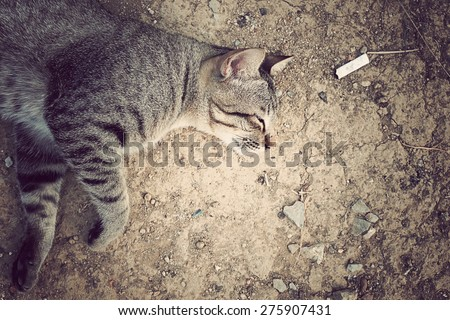 Vintage style cat on the ground, vintage tone