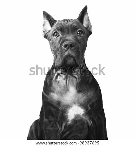 Vintage style doggy