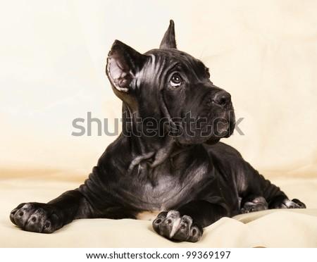 Vintage style doggy #99369197