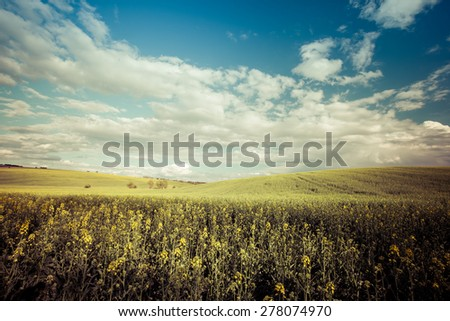 Vintage style photo of beautiful summer field at sunny day